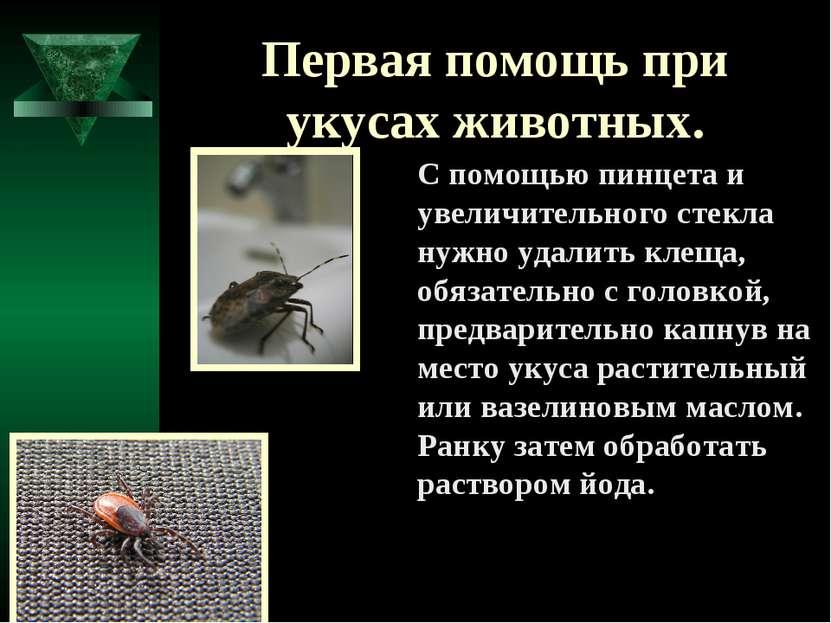 Первая помощь при укусах животных. С помощью пинцета и увеличительного стекла...