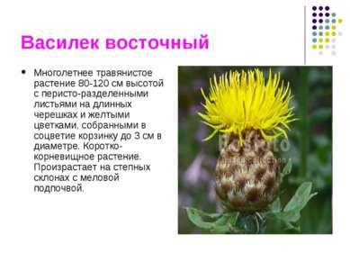 Василек восточный Многолетнее травянистое растение 80-120 см высотой с перист...
