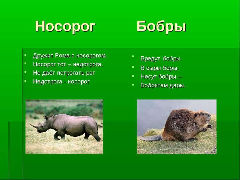 Носорог Бобры Дружит Рома с носорогом. Носорог тот – недотрога. Не даёт потро...