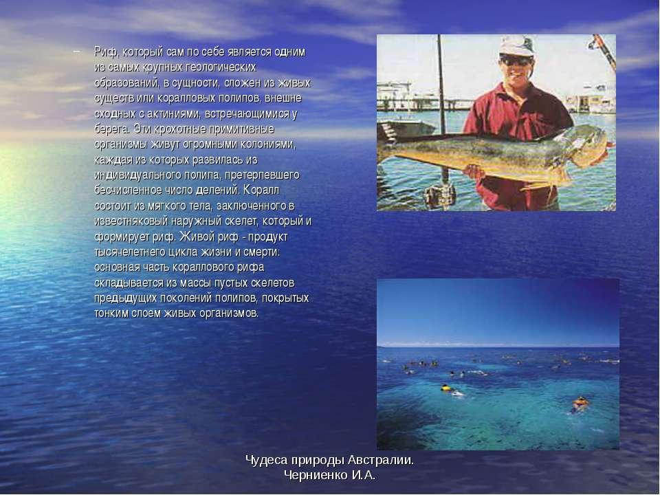 Чудеса природы Австралии. Черниенко И.А. Риф, который сам по себе является од...