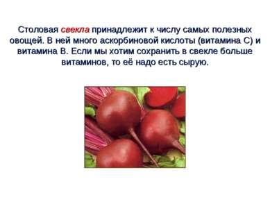 Столовая свекла принадлежит к числу самых полезных овощей. В ней много аскорб...
