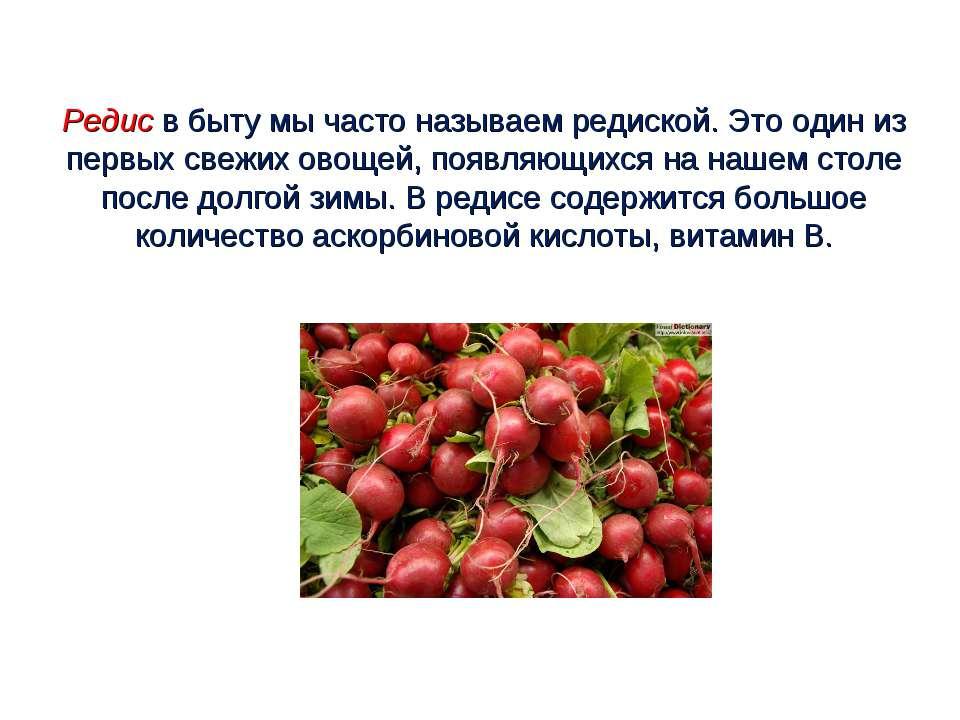 Редис в быту мы часто называем редиской. Это один из первых свежих овощей, по...