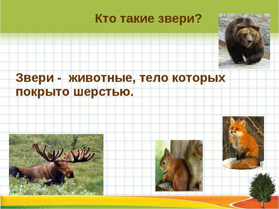 Кто такие звери? Звери - животные, тело которых покрыто шерстью.