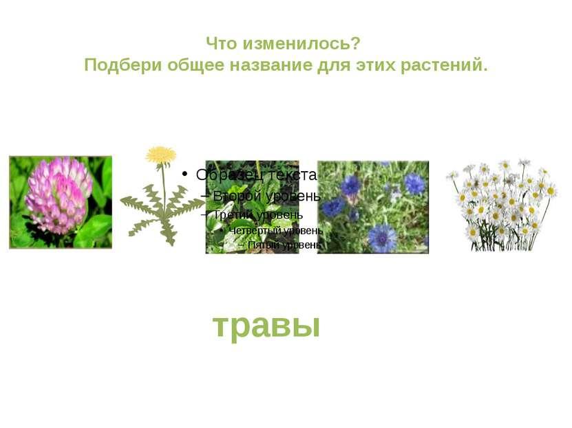 Что изменилось? Подбери общее название для этих растений. травы