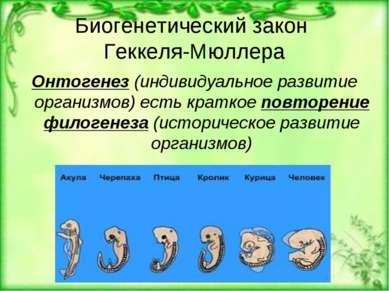 Биогенетический закон Геккеля-Мюллера Онтогенез (индивидуальное развитие орга...