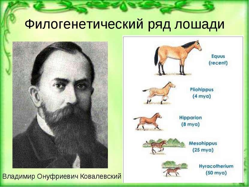 Филогенетический ряд лошади Владимир Онуфриевич Ковалевский