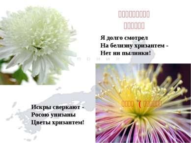 しら菊の目に立てて 見る塵もなし Я долго смотрел На белизну хризантем - Нет ни...