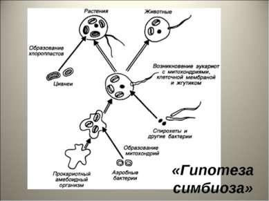«Гипотеза симбиоза»