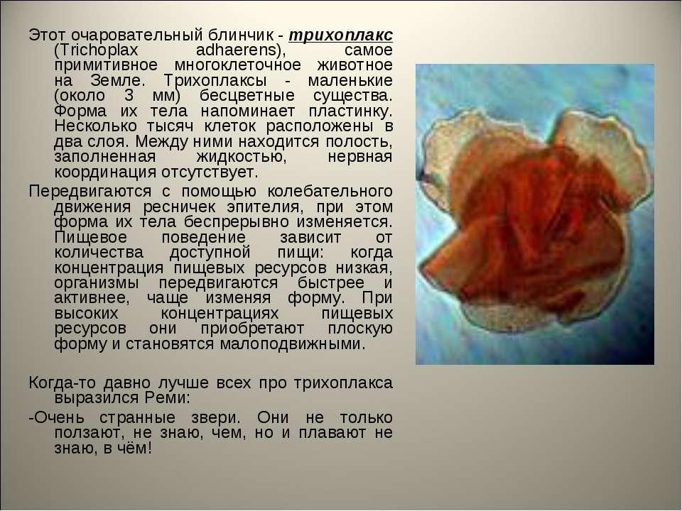 Этот очаровательный блинчик - трихоплакс (Trichoplax adhaerens), самое примит...