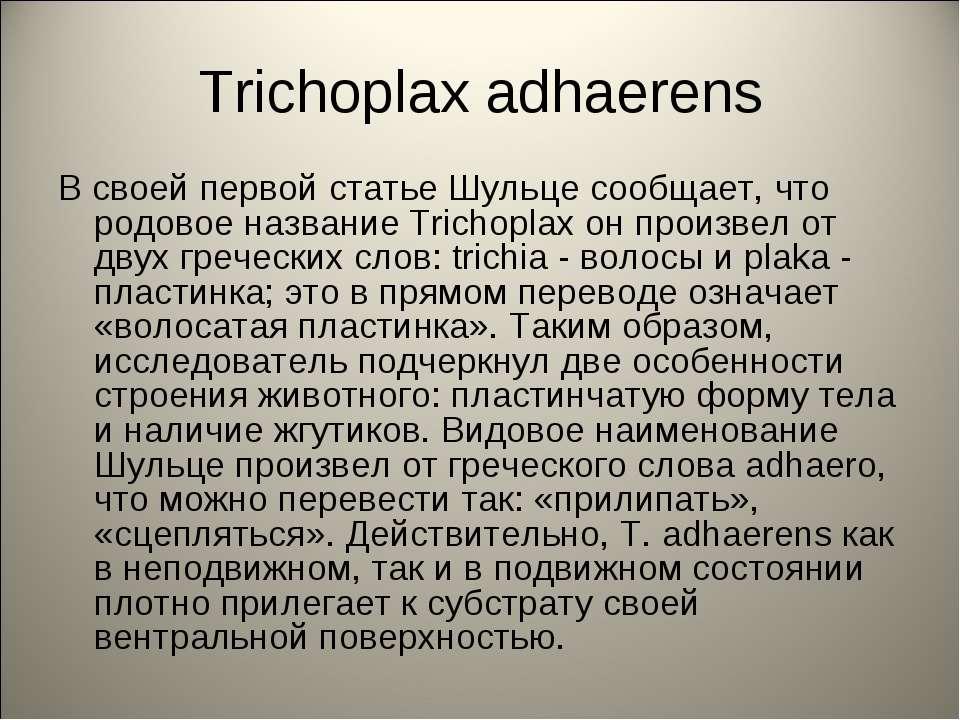 Trichoplax adhaerens В своей первой статье Шульце сообщает, что родовое назва...