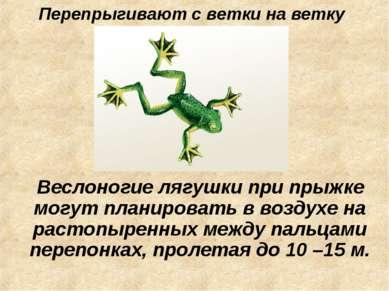 Перепрыгивают с ветки на ветку Веслоногие лягушки при прыжке могут планироват...