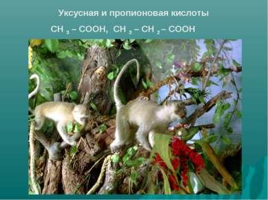 Уксусная и пропионовая кислоты СН 3 – СООН, СН 3 – СН 2 – СООН