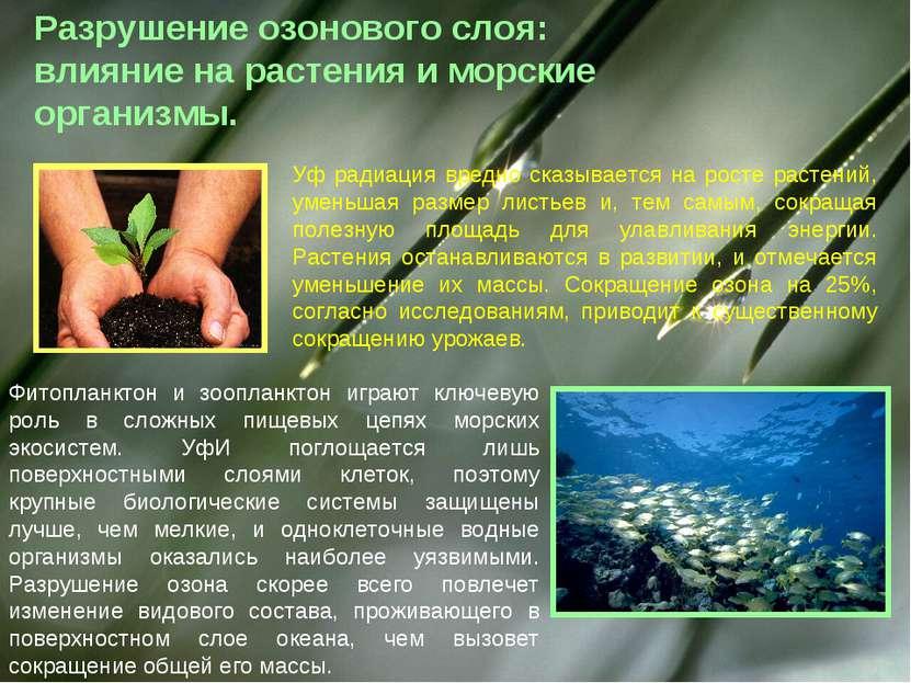 Разрушение озонового слоя: влияние на растения и морские организмы. Уф радиац...