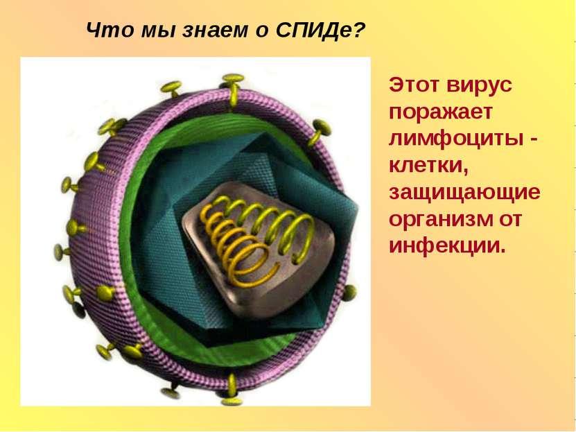 Что мы знаем о СПИДе? Этот вирус поражает лимфоциты - клетки, защищающие орга...