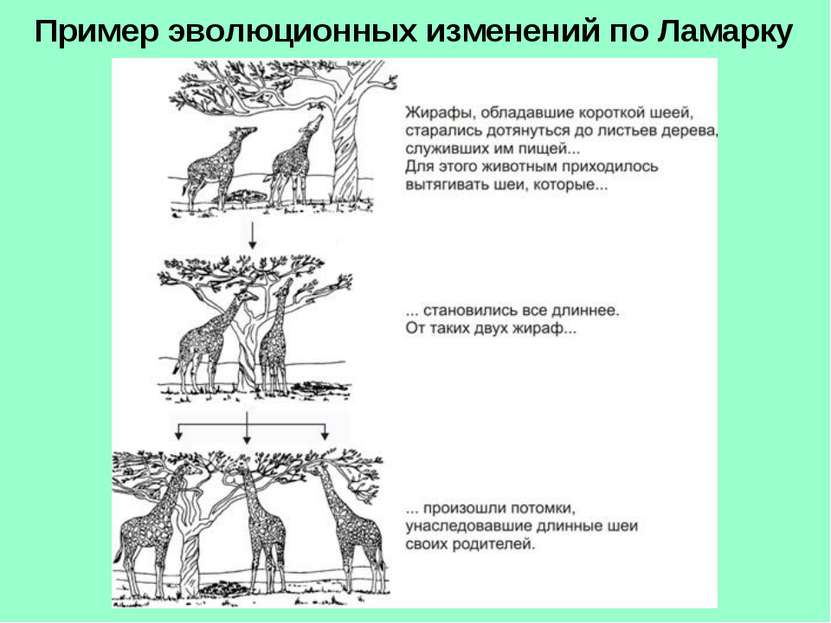 Пример эволюционных изменений по Ламарку