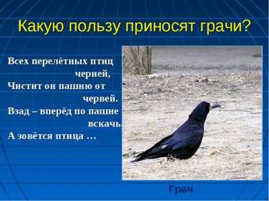 Всех перелётных птиц черней, Чистит он пашню от червей. Взад – вперёд по пашн...