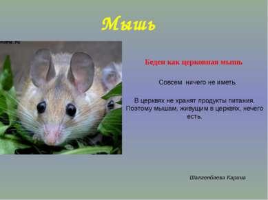 Мышь Беден как церковная мышь Совсем ничего не иметь. В церквях не хранят про...