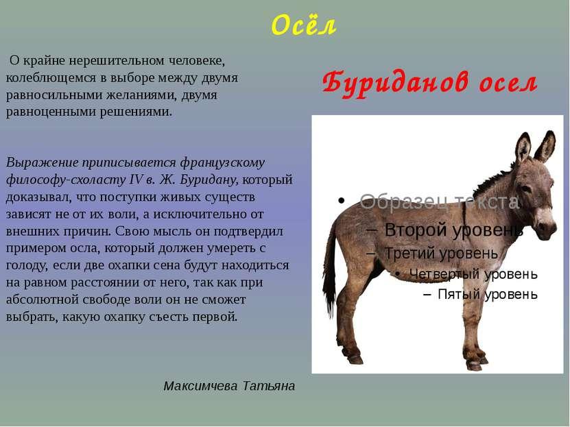 Буриданов осел О крайне нерешительном человеке, колеблющемся в выборе между д...