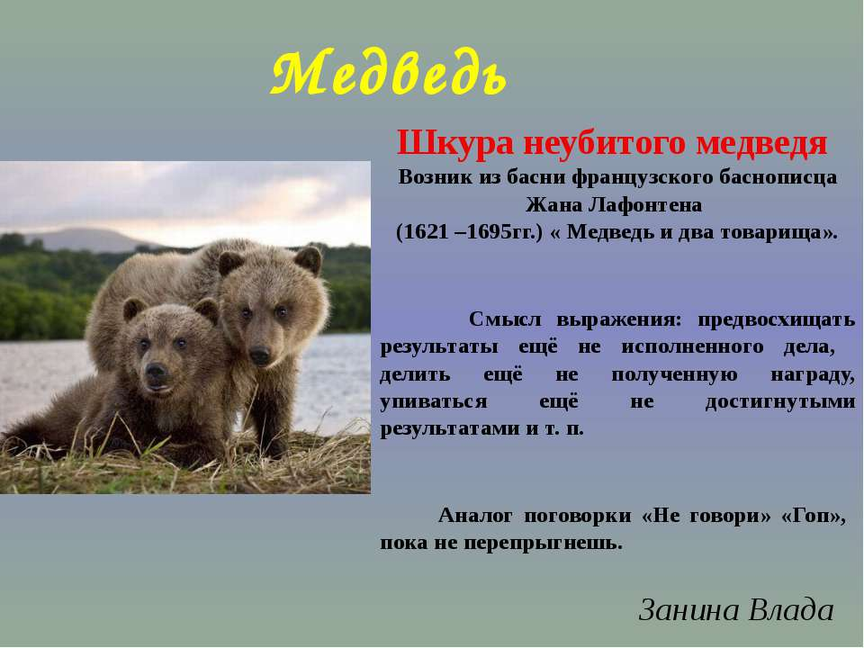 Медведь Шкура неубитого медведя Возник из басни французского баснописца Жана ...