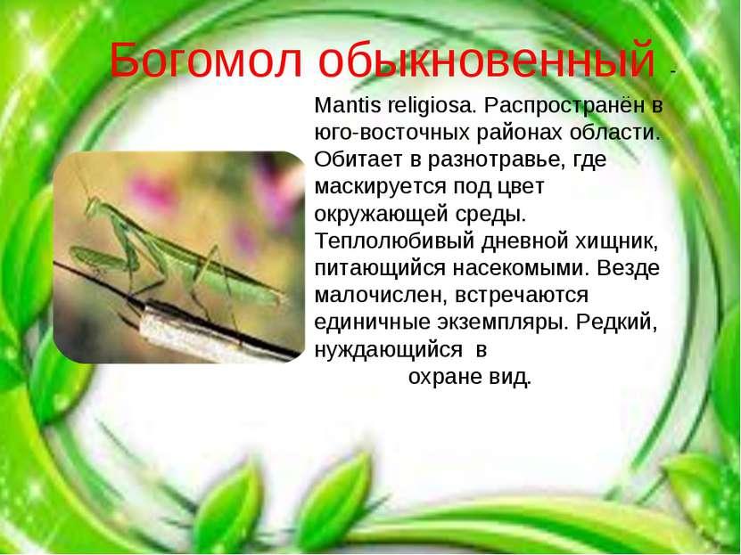 Mantis religiosa. Распространён в юго-восточных районах области. Обитает в ра...