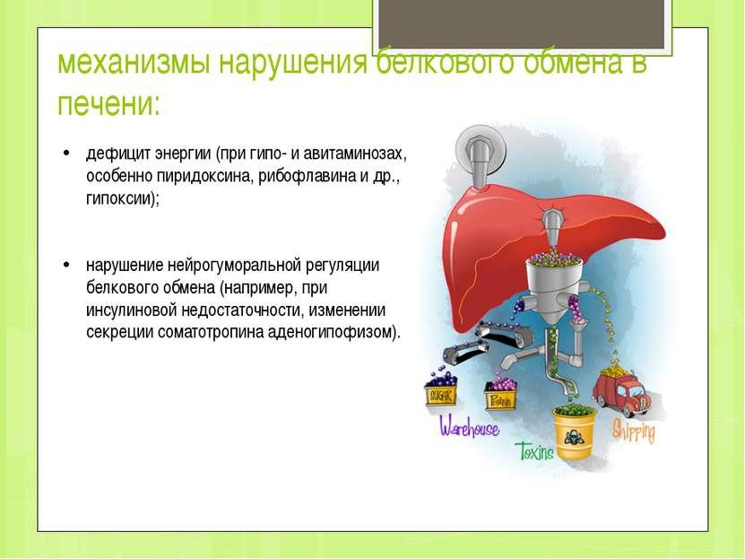 механизмы нарушения белкового обмена в печени: дефицит энергии (при гипо- и а...
