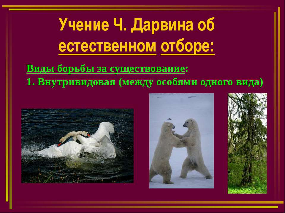 Учение Ч. Дарвина об естественном отборе: Виды борьбы за существование: 1. Вн...