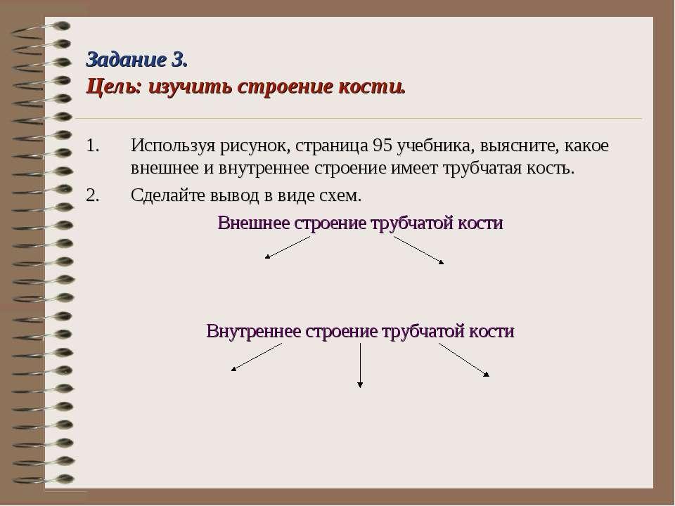 Задание 3. Цель: изучить строение кости. Используя рисунок, страница 95 учебн...