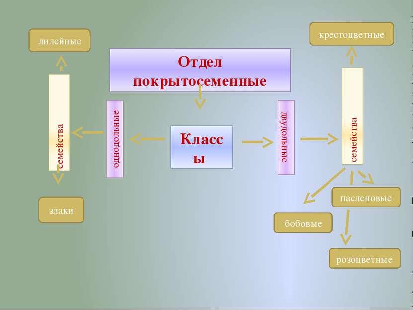 Класс Однодольные Одна семядоля в зародыше семени Мочковатая корневая система...