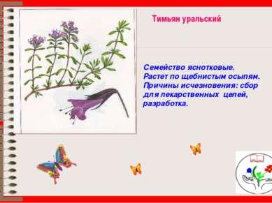 Тимьян уральский Семейство яснотковые. Растет по щебнистым осыпям. Причины ис...