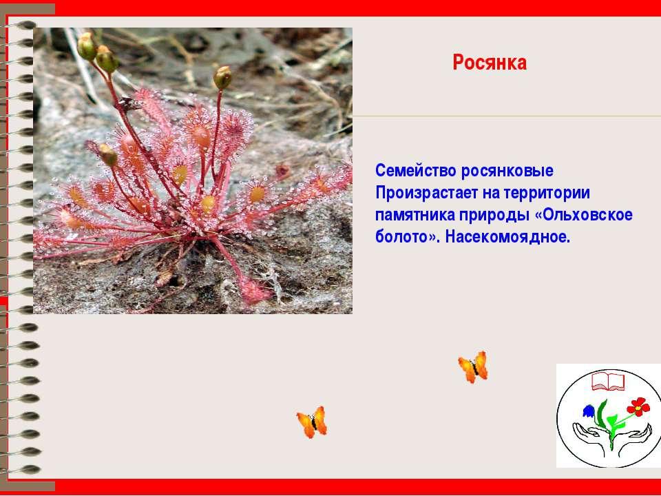 Росянка Семейство росянковые Произрастает на территории памятника природы «Ол...