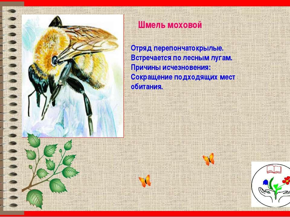 Шмель моховой Отряд перепончатокрылые. Встречается по лесным лугам. Причины и...