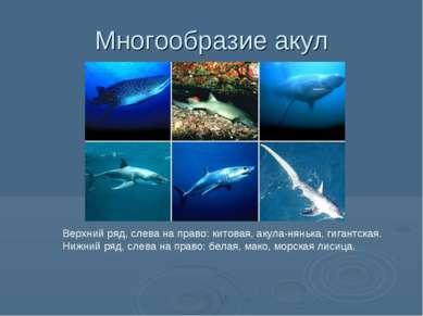 Многообразие акул Верхний ряд, слева на право: китовая, акула-нянька, гигантс...