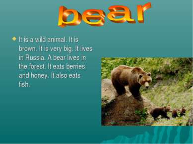 It is a wild animal. It is brown. It is very big. It lives in Russia. A bear ...