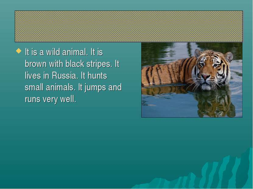 It is a wild animal. It is brown with black stripes. It lives in Russia. It h...