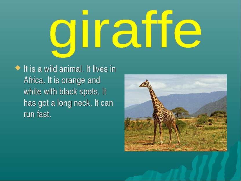 It is a wild animal. It lives in Africa. It is orange and white with black sp...