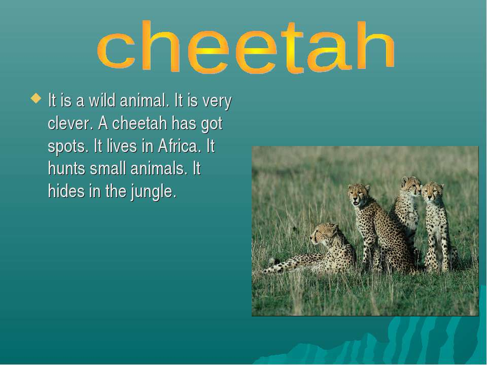 It is a wild animal. It is very clever. A cheetah has got spots. It lives in ...