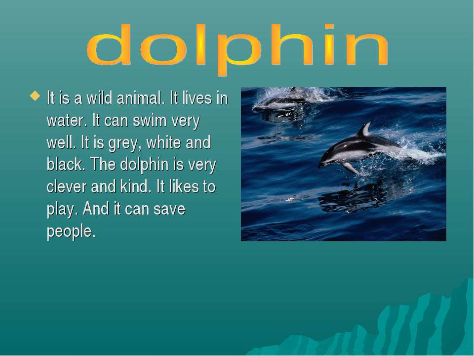 It is a wild animal. It lives in water. It can swim very well. It is grey, wh...
