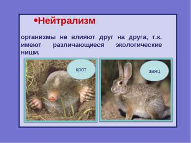 Нейтрализм организмы не влияют друг на друга, т.к. имеют различающиеся эколог...