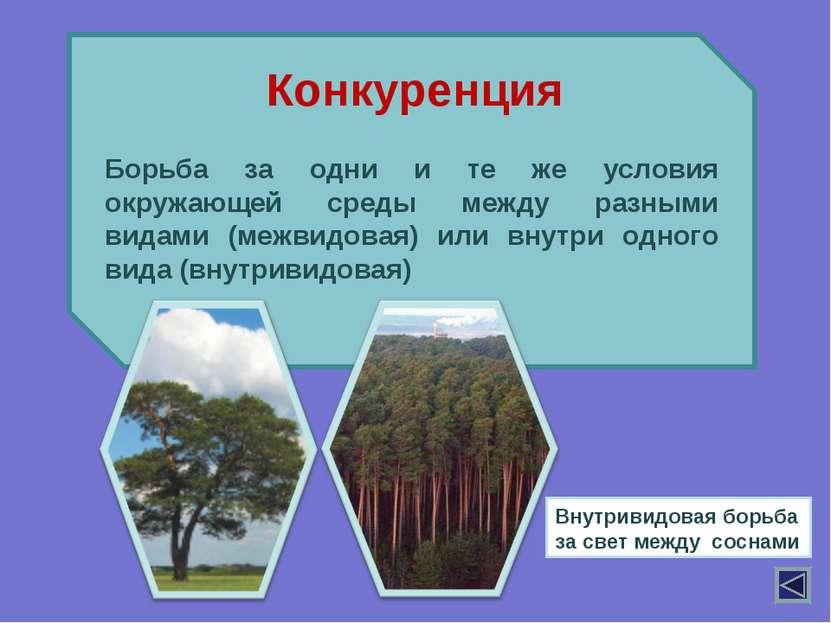 Борьба за одни и те же условия окружающей среды между разными видами (межвидо...
