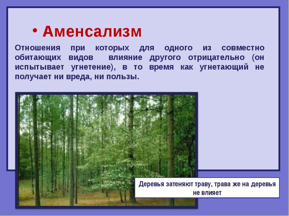 Аменсализм Отношения при которых для одного из совместно обитающих видов влия...