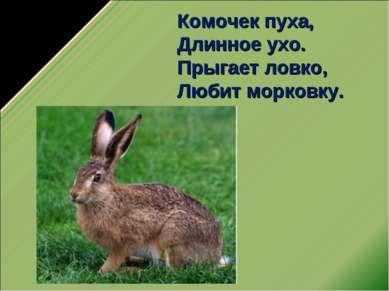 Комочек пуха, Длинное ухо. Прыгает ловко, Любит морковку.