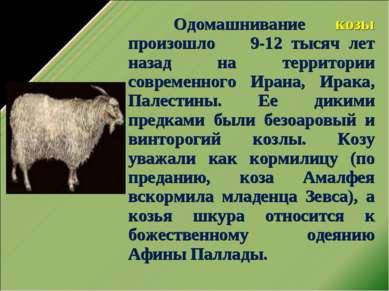 Одомашнивание козы произошло 9-12 тысяч лет назад на территории современного ...