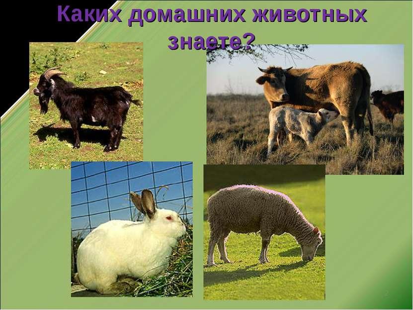 * Каких домашних животных знаете?
