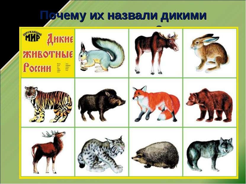 Почему их назвали дикими животными?