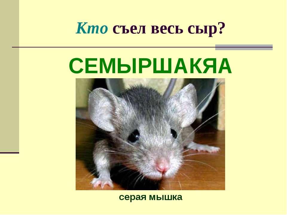 Кто съел весь сыр? СЕМЫРШАКЯА серая мышка