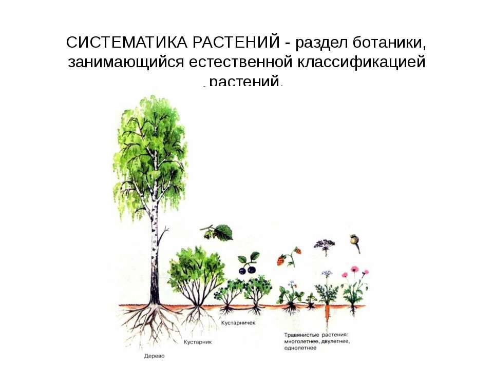 СИСТЕМАТИКА РАСТЕНИЙ - раздел ботаники, занимающийся естественной классификац...
