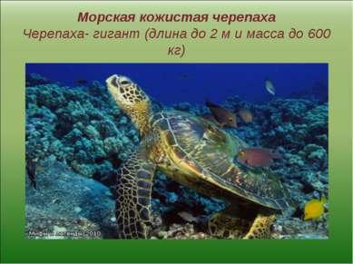 Морская кожистая черепаха Черепаха- гигант (длина до 2 м и масса до 600 кг)