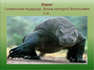 Варан Гигантская ящерица, длина которой достигает 2 м .
