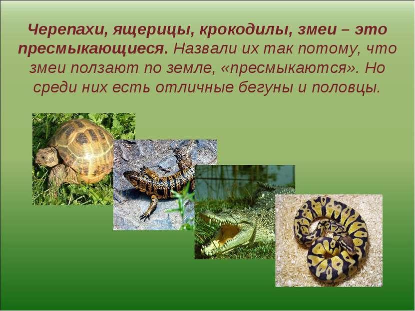 Черепахи, ящерицы, крокодилы, змеи – это пресмыкающиеся. Назвали их так потом...