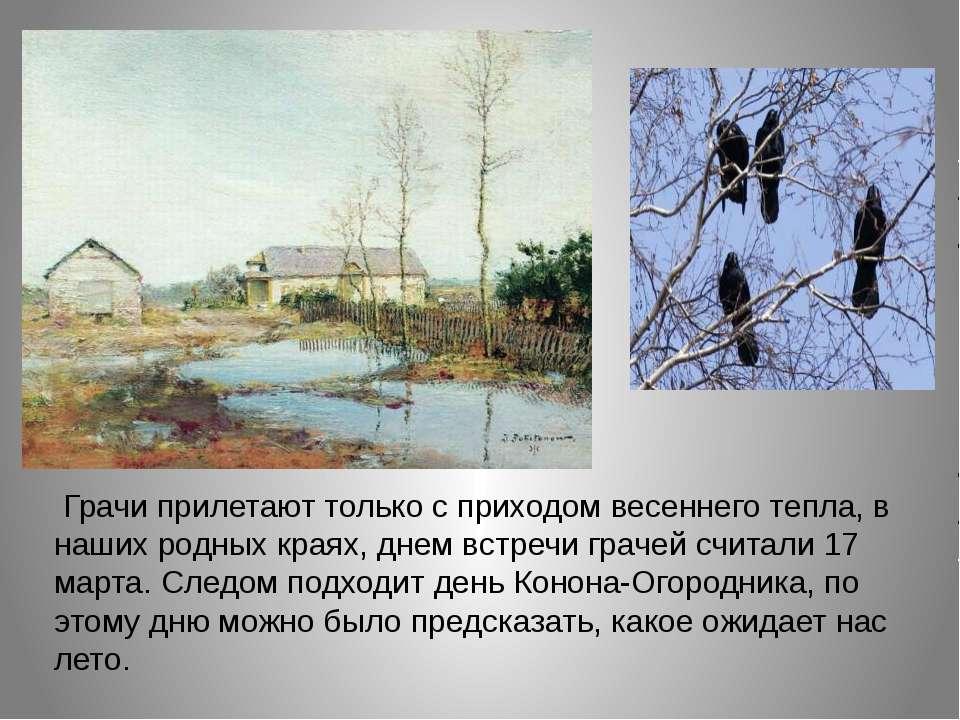 Грачи прилетают только с приходом весеннего тепла, в наших родных краях, дне...
